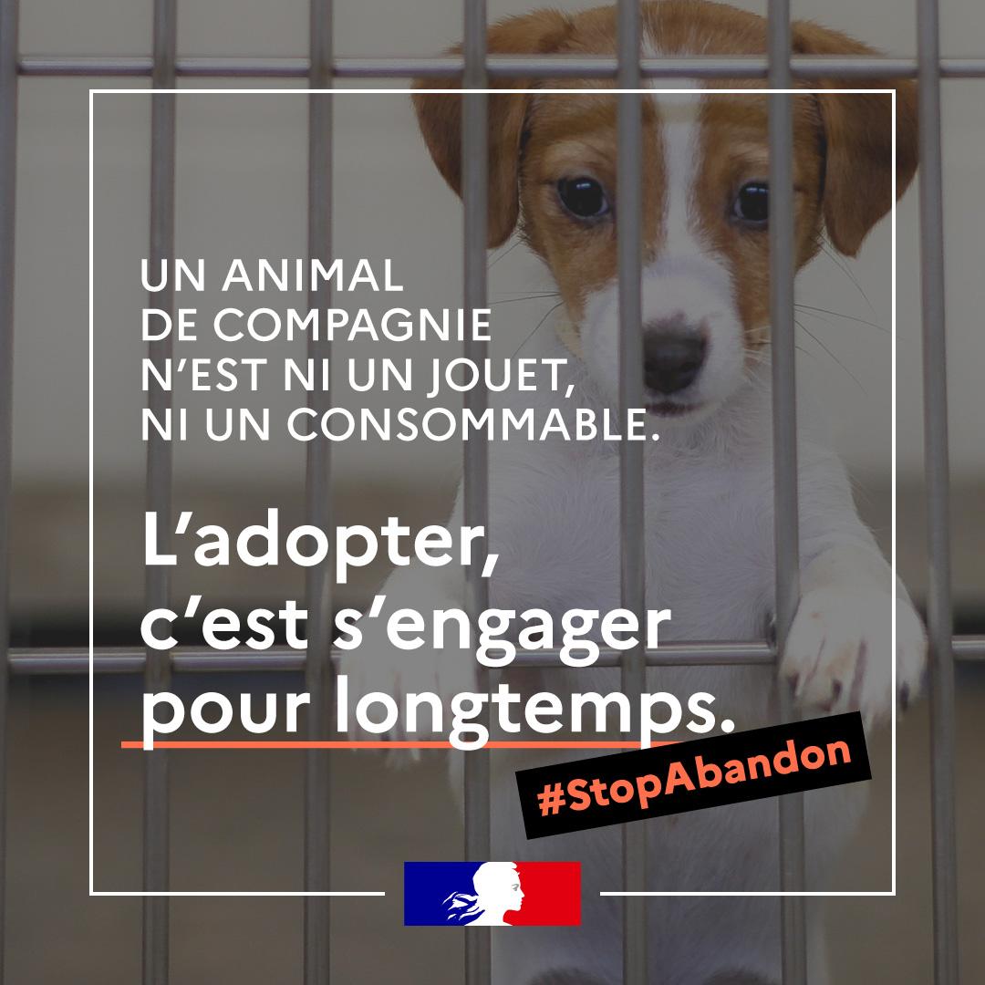 Adoption abandon animaux 08 2021